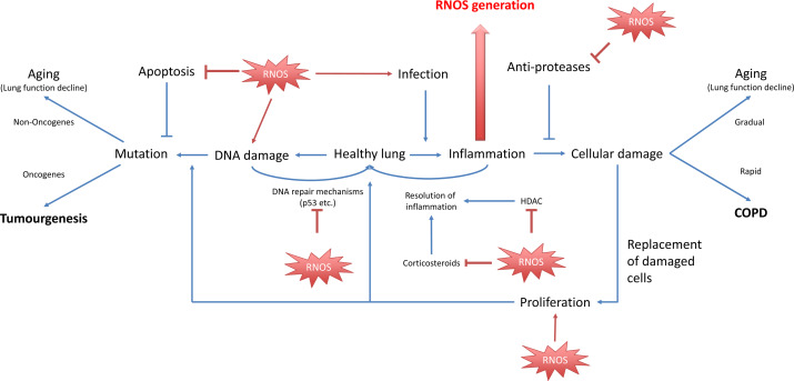 copd and lung cancer relationship